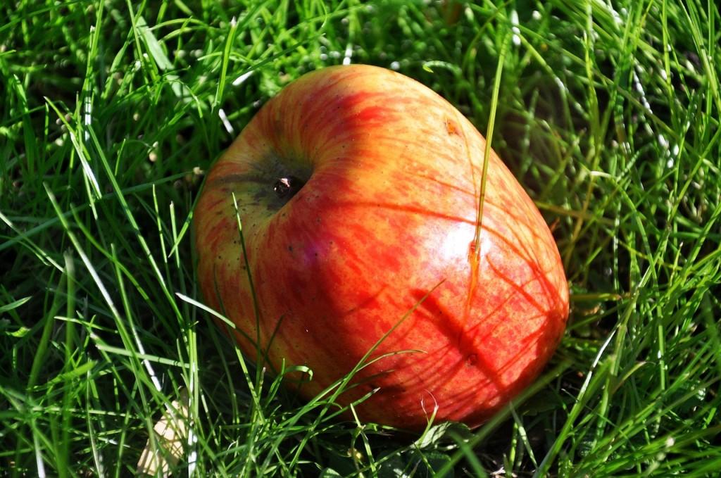 jablka4